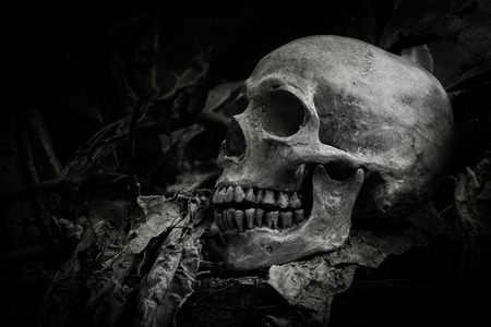 corpse flower: still life of skull on dried tree background Stock Photo