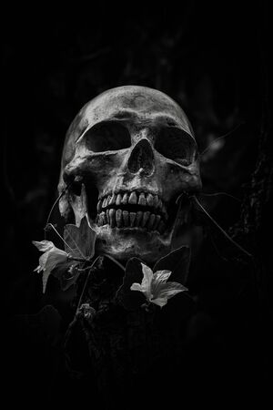 Still Life Of Skull And Flowers On Black And White Stock Photo