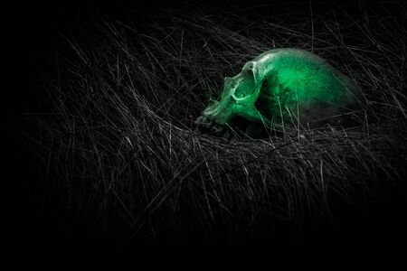 corpse flower: still life of skull  on dried grass