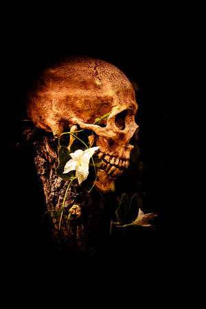 corpse flower: still life of skull and flowers on dried wood