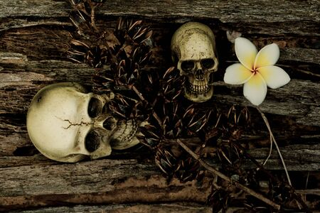 corpse flower: Still life with skull in dried tree Stock Photo