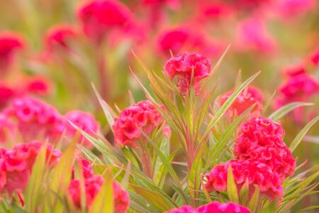 green nature: Colorful flower on green nature background