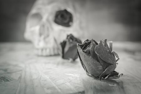 corpse flower: Still life with dried rose and human skull