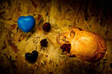 corpse flower: Still life with human skull and black heart,Love style Stock Photo