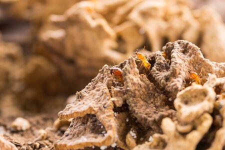 swarm: Termites swarm and pattern of soil nest Stock Photo