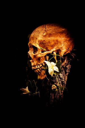 ghost face: Still life with human skull and flower on black background Stock Photo