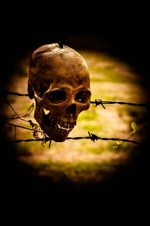life and death: Still life with human skull on barb wire