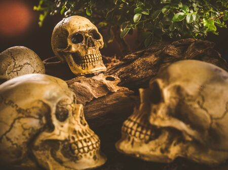 Still life with human skull and nature background