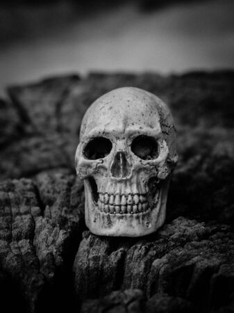 A human skull on dried wood, Still life concept