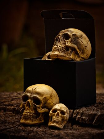 Still life with box of human skull on nature background Stock Photo