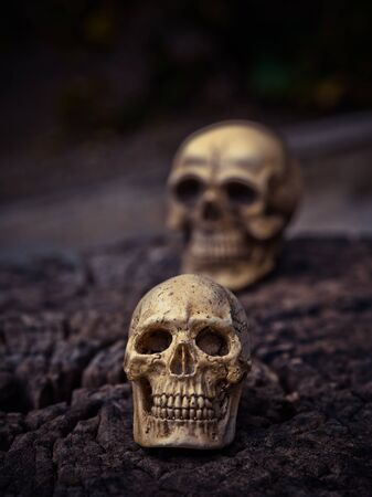 Group of human skull on dried wood, Still life concept