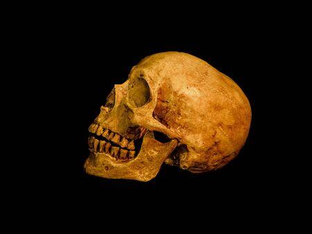 Still life with human skull on dark background