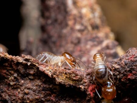 Termites are social creatures that damage people 's wooden houses because they eat wood, But termites help to create balance in nature