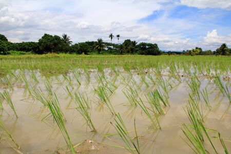 sufficiency: field thailand