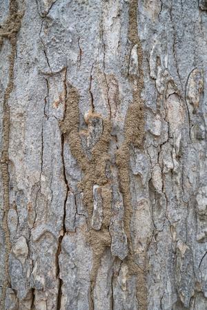 archetype: termite tree