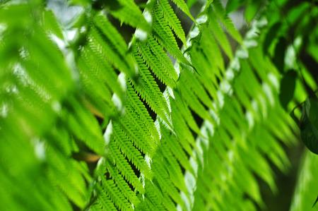 Groene varen in een regenwoud Stockfoto - 37231367