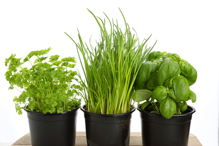 different green herbs for cooking with white background Stok Fotoğraf
