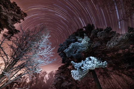 Rotation of stars in the violet sky in the winter in the forest.