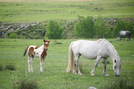 A foal and a horse sit on a green meadow. Stock Photo
