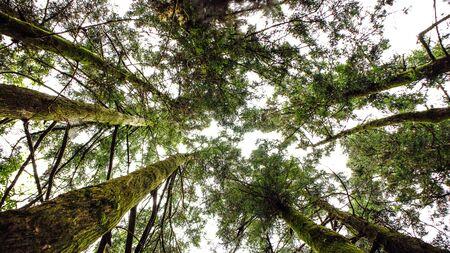 Debajo del árbol Foto de archivo - 93787054
