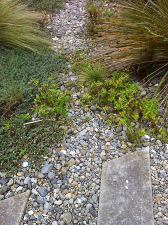 groundcover: A Ground-cover plants border a narrow stone pathway narrow stone pathway