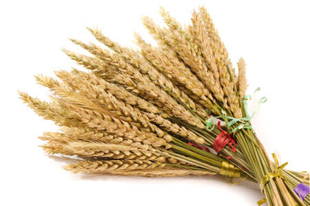 Dried Wheat Bunch Stock Photo - 4962357