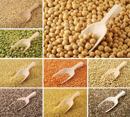 seeds of various: Various spices, grains, beans and herbs Stock Photo