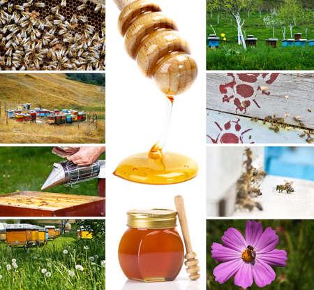 Beekeeping photo