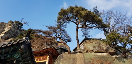 Buddhist temples and pine trees Stock fotó