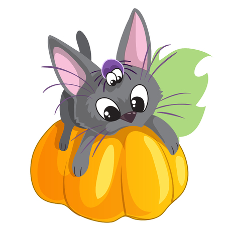 Little kitten liying on pumpking with his friend spider, vector picture