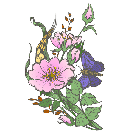 Wild dog rose flowers with butterfly drawing vector clipart on white background.