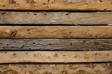 The Boards has been eaten by woodworm