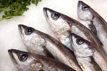 escamas de peces: Una pantalla de pescado congelado en un mercado de pescado franc�s