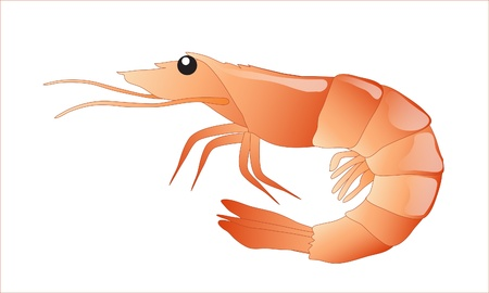 A shrimp isolated on white background. EPS10 vector format. Çizim