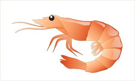 Un camarón aislado sobre fondo blanco. Formato vectorial EPS10.