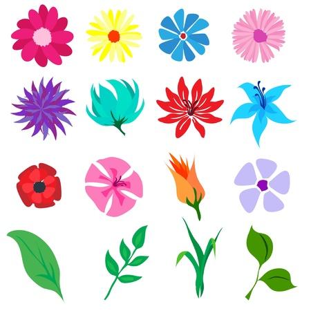Una illustrazione vettoriale di fiori e foglie isolati su bianco Vettoriali