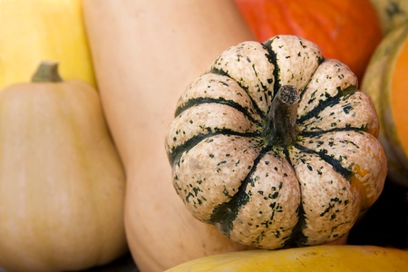 Pumpkins and squashes for sale at a market Stock Photo - 10799067
