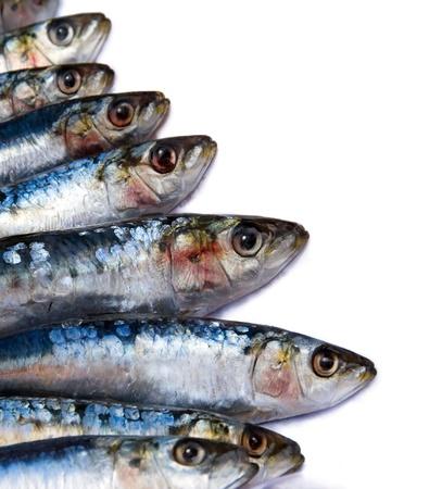 visboer: Verse sardines op een witte achtergrond met een kopie ruimte