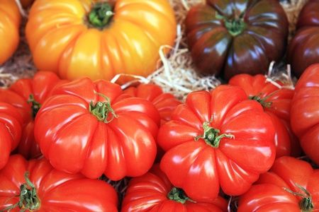 An assortment of fresh tomatoes displayed on a bed of straw at the market Stock Photo - 10799061