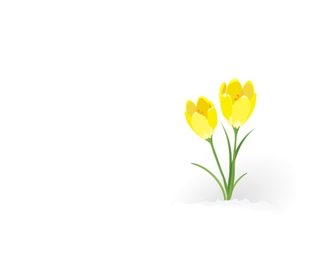 A vector illustration of yellow crocuses flowering through the snow. Room for text. Stock Vector - 10837545