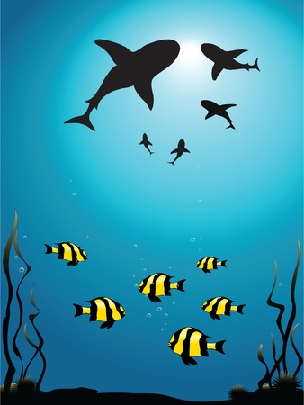 dangerous reef: Vector illustration - seascape of sharks circling smaller fish