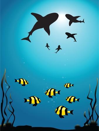 circling: Vector illustration - seascape of sharks circling smaller fish