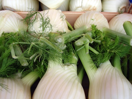 vegetable cook: Fresh fennel for sale at a market