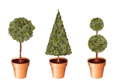 potted plant: Vector of standard trees in terracotta pots isolated on white. Illustration