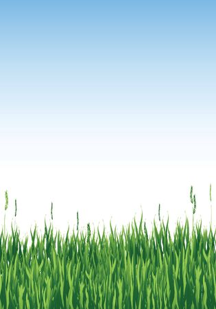 Vector illustration of long grass against blue sky with copy space Stock Vector - 10912729