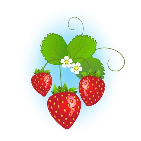 Fraisier aux fraises mûres et de fleurs sur fond bleu.