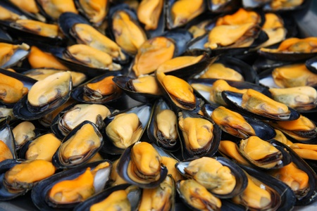 flesh:  A display of fresh mussels for sale at a fish market Stock Photo