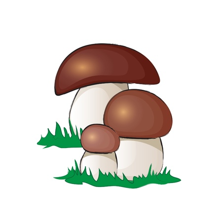 A group of ceps mushrooms isolated on white. EPS10 vector format Vector