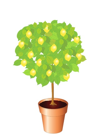 alphabet tree: Vector illustration of a lemon tree. Also available as a jpg
