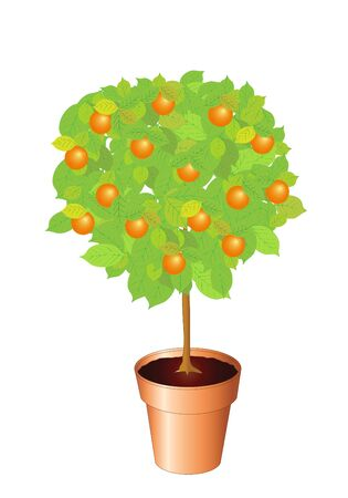 Vector illustration of an orange tree. lso available as jpg Stock Vector - 12235546